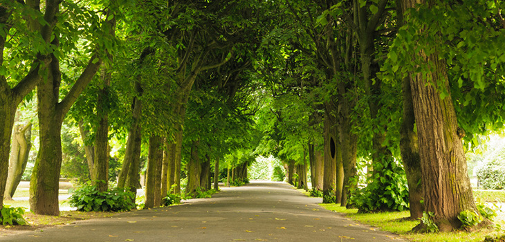 green trees with a road